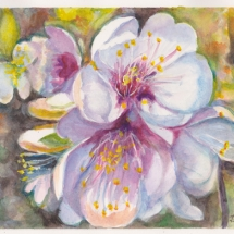 Apple Blossom Aquarelle
