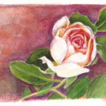 Birthday Card Rose