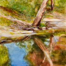 Darebin Creek Gum Tree