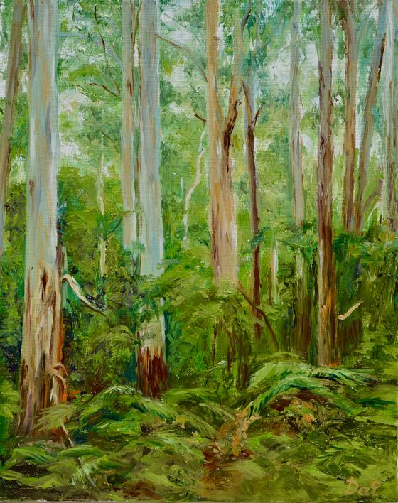 Yarra Ranges Forest Victoria