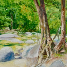Mossman Gorge in FNQ