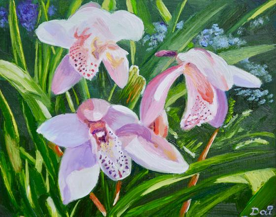Three Pink Cymbidium Orchids