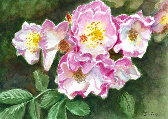 Climbing Roses at Montsalvat